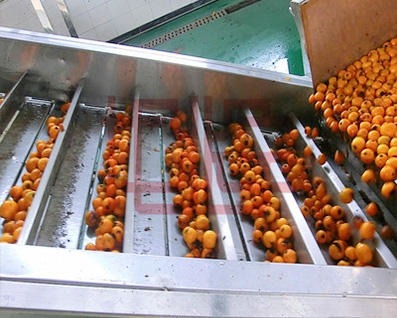 Food grade conveyor, fruit elevator, fruit and vegetable lift conveyor, loquat conveyor